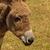 szamár · közelkép · dombok · részleg · Colombia · arc - stock fotó © zittto