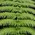 eğreltiotu · yaprak · doku · yeşil · renk - stok fotoğraf © zkruger