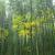 bambusz · erdő · ázsiai · reggel · napfény · fa - stock fotó © zkruger