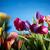 wiosną · kwiaty · bukiet · tulipany · kolorowy · bokeh - zdjęcia stock © zolnierek