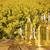 oleju · warzyw · butelek · szkła · tabeli · kwiat - zdjęcia stock © zolnierek