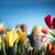 Wielkanoc · bukiet · tulipany · Easter · Eggs · kolorowy · bokeh - zdjęcia stock © zolnierek