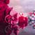 speciaal · dag · boeket · rozen · hartvorm · vak - stockfoto © zolnierek