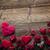 dag · Rood · harten · rozen · houten · tafel · textuur - stockfoto © zolnierek