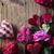 dia · vermelho · corações · rosas · mesa · de · madeira · flor - foto stock © zolnierek
