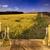 olie · plantaardige · flessen · glas · tabel · bloem - stockfoto © zolnierek