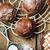 vla · room · gebak · shell · vruchten · oranje - stockfoto © zoryanchik