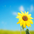 weinig · bee · zonnebloem · foto · vergadering - stockfoto © zurijeta