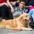 yakışıklı · köpek · İngilizce · buldok · yukarı · siyah - stok fotoğraf © zurijeta