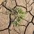 száraz · terep · föld · textúra · absztrakt · minta - stock fotó © zurijeta