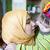 moslim · familie · verjaardag · vrouw · partij · gezicht - stockfoto © zurijeta