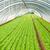 serra · alimentare · natura · giardino · farm - foto d'archivio © zurijeta