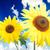 mooie · gele · bloem · kleurrijk · zonnebloem · natuur · zomer - stockfoto © zurijeta