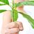 kéz · kezek · kint · baba · nyár · zöld - stock fotó © zurijeta