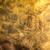 テクスチャ · 壁 · 装飾的な · 石膏 · することができます · 中古 - ストックフォト © zurijeta