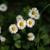 fehér · zöld · fű · virág · virágok · természet · tájkép - stock fotó © zurijeta