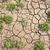 növény · növekvő · törés · száraz · föld · textúra - stock fotó © zurijeta