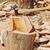 tűzifa · boglya · előkészített · tél · fa · ipar - stock fotó © zurijeta