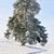 fa · hó · fedett · mező · háttér · tél - stock fotó © zurijeta