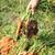 havuç · zemin · organik · taze · büyüyen · organik · gıda - stok fotoğraf © zurijeta