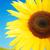 mooie · gele · bloem · kleurrijk · zonnebloem · hemel · natuur - stockfoto © zurijeta