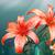 dois · lírios · belo · isolado · branco · flores - foto stock © zven0