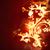 огненный · цветок · ярко · цветы · темно · красный - Сток-фото © zven0
